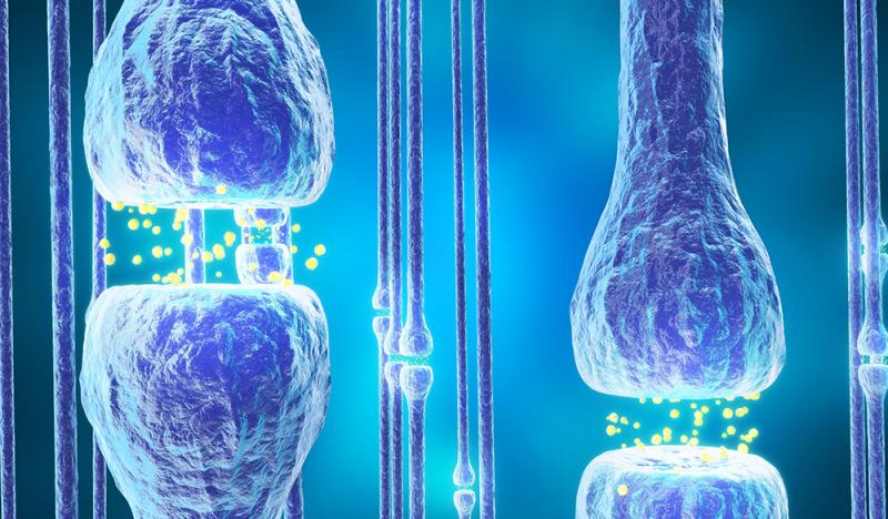 Was sind Cannabinoid Rezeptoren?