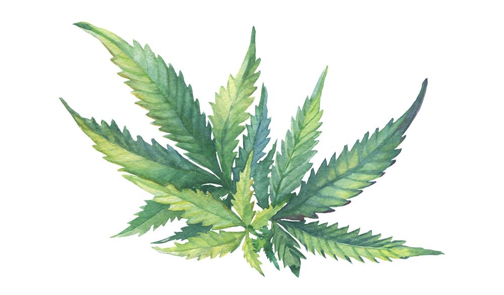 Cannabinoide, Terpene und Flavonoide